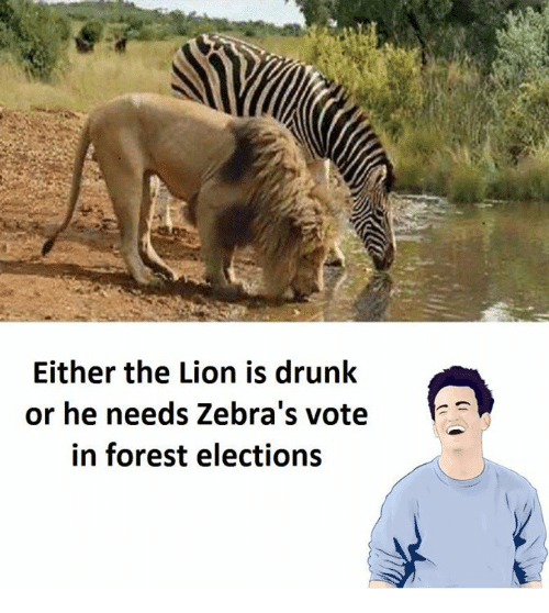 Drunk, Lion, and Forest: Either the Lion is drunk  or he needs Zebra's vote  in forest elections