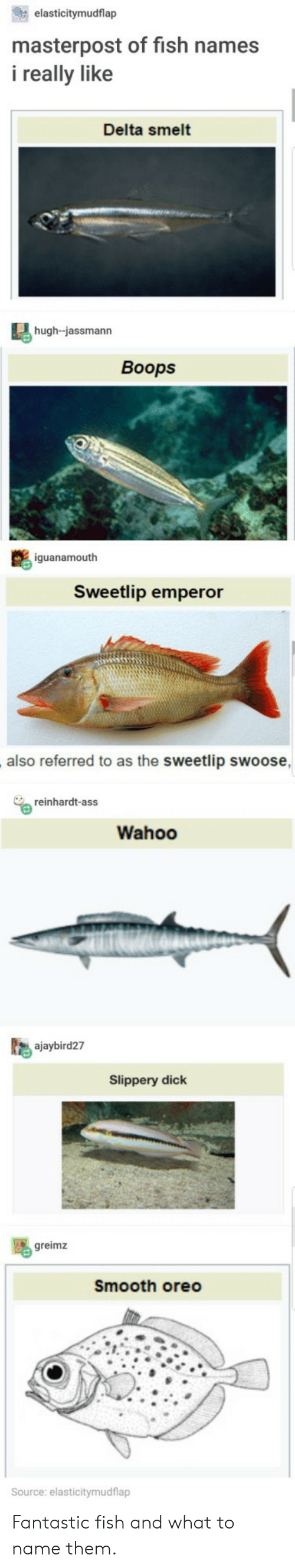 Reinhardt: elasticitymudflap  masterpost of fish names  i really like  Delta smelt  hugh-jassmann  Boops  iguanamouth  Sweetlip emperor  also referred to as the sweetlip swoose  reinhardt-ass  Wahoo  ajaybird27  Slippery dick  greimz  Smooth oreo  ource: elasticitymudflap Fantastic fish and what to name them.