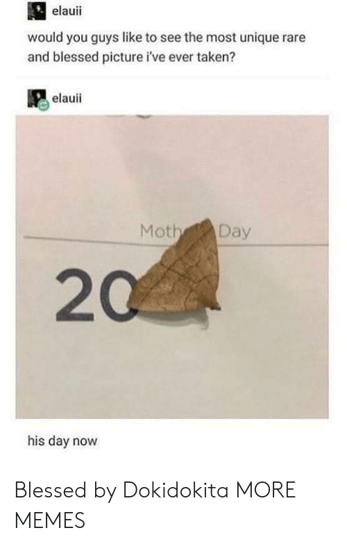 Rares: elauii  would you guys like to see the most unique rare  and blessed picture i've ever taken?  elauii  Moth Day  20  his day novw Blessed by Dokidokita MORE MEMES