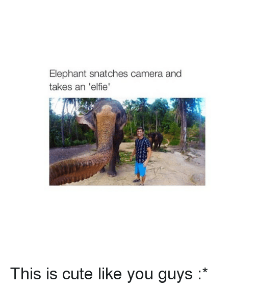 Cute, Camera, and Elephant: Elephant snatches camera and  takes an 'elfie This is cute like you guys :*