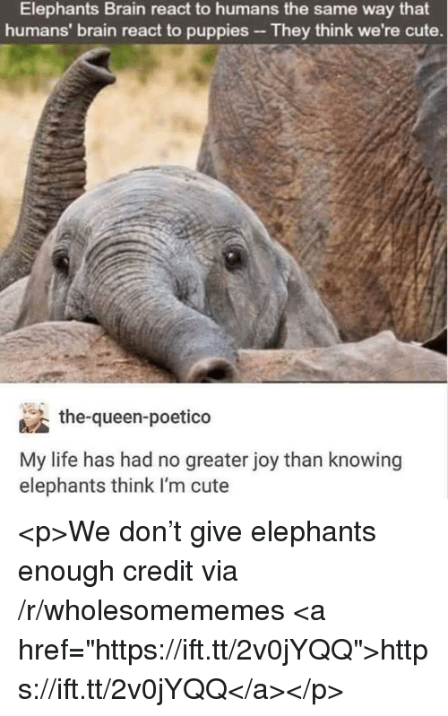 """Cute, Life, and Puppies: Elephants Brain react to humans the same way that  humans' brain react to puppies They think we're cute.  涵the-queen-poetico  My life has had no greater joy than knowing  elephants think I'm cute <p>We don't give elephants enough credit via /r/wholesomememes <a href=""""https://ift.tt/2v0jYQQ"""">https://ift.tt/2v0jYQQ</a></p>"""