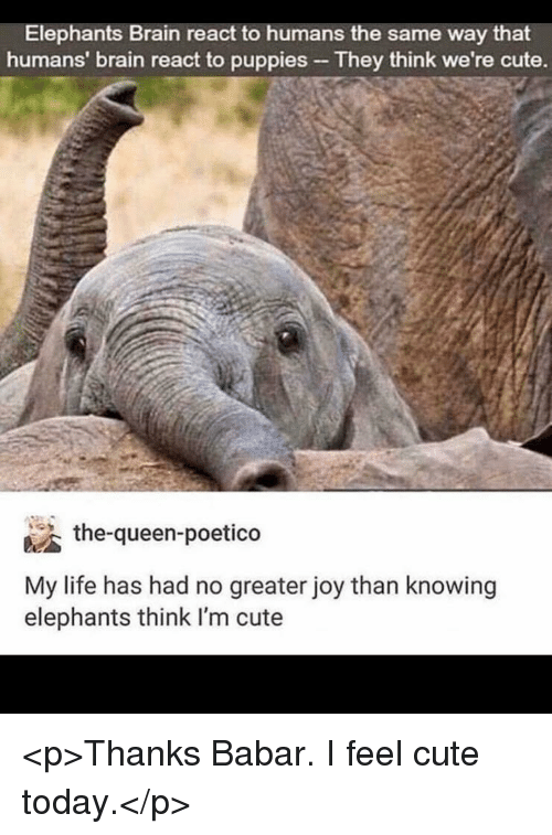 Cute, Life, and Puppies: Elephants Brain react to humans the same way that  humans' brain react to puppies They think we're cute.  the-queen-poetico  My life has had no greater joy than knowing  elephants think I'm cute <p>Thanks Babar. I feel cute today.</p>