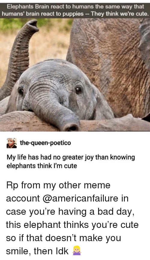 Bad, Bad Day, and Cute: Elephants Brain react to humans the same way that  humans' brain react to puppies They think we're cute.  the-queen-poetico  My life has had no greater joy than knowing  elephants think l'm cute Rp from my other meme account @americanfailure in case you're having a bad day, this elephant thinks you're cute so if that doesn't make you smile, then Idk 🤷🏼♀️