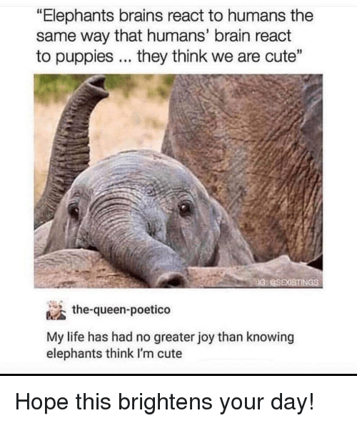 """im cute: """"Elephants brains react to humans the  same way that humans' brain react  to puppies... they think we are cute""""  the-queen-poetico  My life has had no greater joy than knowing  elephants think I'm cute Hope this brightens your day!"""