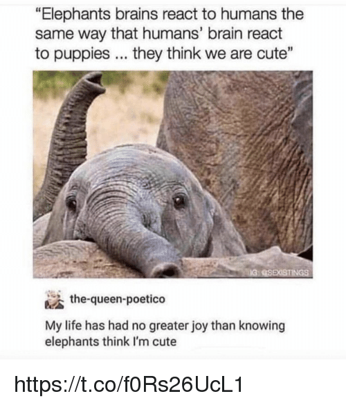 """im cute: """"Elephants brains react to humans the  same way that humans' brain react  to puppies. they think we are cute""""  IG  the-queen-poetico  My life has had no greater joy than knowing  elephants think I'm cute https://t.co/f0Rs26UcL1"""