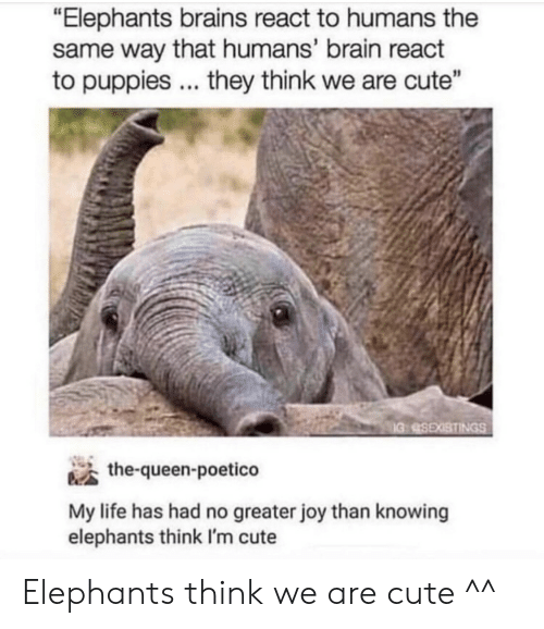 """im cute: """"Elephants brains react to humans the  same way that humans' brain react  to puppies they think we are cute""""  the-queen-poetico  My life has had no greater joy than knowing  elephants think I'm cute Elephants think we are cute ^^"""