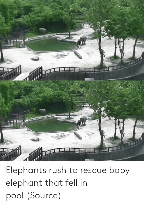 Rush: Elephants rush to rescue baby elephant that fell in pool(Source)