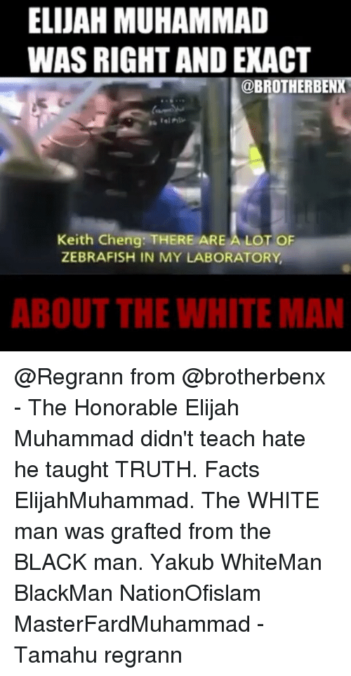 elijah muhammad: ELIJAH MUHAMMAD  WAS RIGHT AND EXACT  @BROTHER BENXM  Keith Cheng THERE ARE A LOT OF  ZEBRAFISH IN MY LABORATORY  ABOUT THE WHITEMAN @Regrann from @brotherbenx - The Honorable Elijah Muhammad didn't teach hate he taught TRUTH. Facts ElijahMuhammad. The WHITE man was grafted from the BLACK man. Yakub WhiteMan BlackMan NationOfislam MasterFardMuhammad - Tamahu regrann
