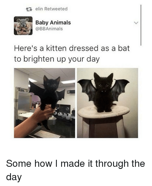 Baby Animals: elin Retweeted  Baby Animals  @BB Animals  Here's a kitten dressed as a bat  to brighten up your day Some how I made it through the day