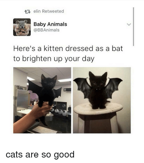 Baby Animals: elin Retweeted  Baby Animals  @BB Animals  Here's a kitten dressed as a bat  to brighten up your day cats are so good