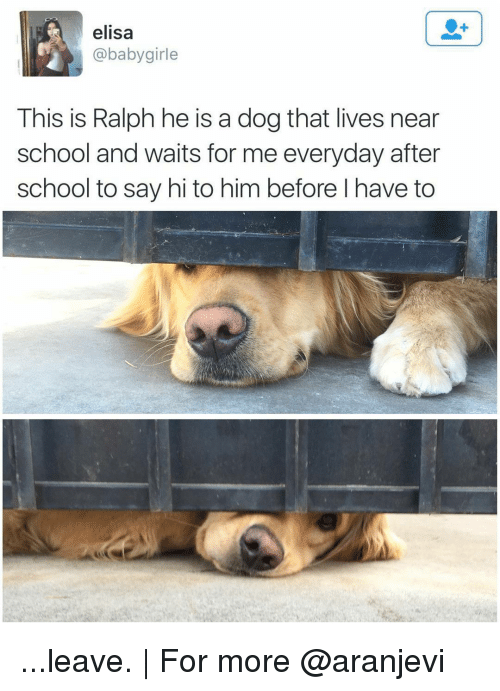 Girls, Memes, and School: elisa  (a baby girle  This is Ralph he is a dog that lives near  school and waits for me everyday after  school to say hi to him before l have to ...leave. | For more @aranjevi