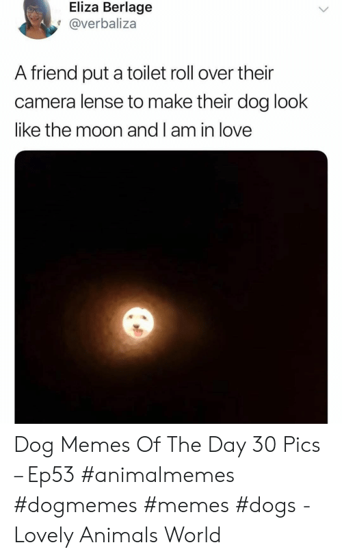 Memes Dogs: Eliza Berlage  @verbaliza  A friend put a toilet roll over their  camera lense to make their dog look  like the moon and l am in love Dog Memes Of The Day 30 Pics – Ep53 #animalmemes #dogmemes #memes #dogs - Lovely Animals World