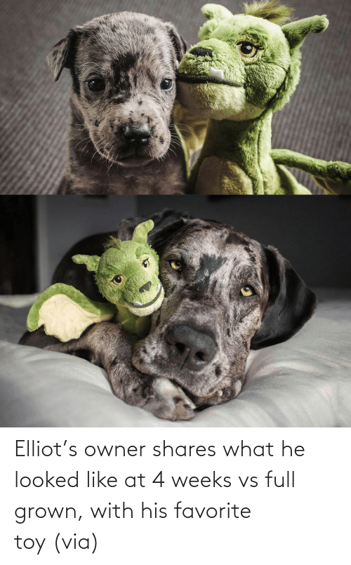 via: Elliot's owner shares what he looked like at 4 weeks vs full grown, with his favorite toy (via)