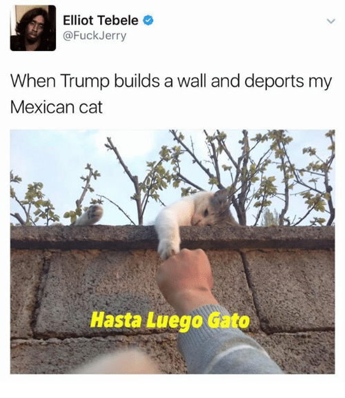 Hasta Luego: Elliot Tebele  @Fuck Jerry  When Trump builds a wall and deports my  Mexican cat  Hasta Luego Gato