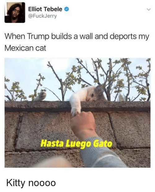 Trump Builds A Wall: Elliot Tebele  @FuckJerry  When Trump builds a wall and deports my  Mexican cat  Hasta Luego Gato <p>Kitty noooo</p>