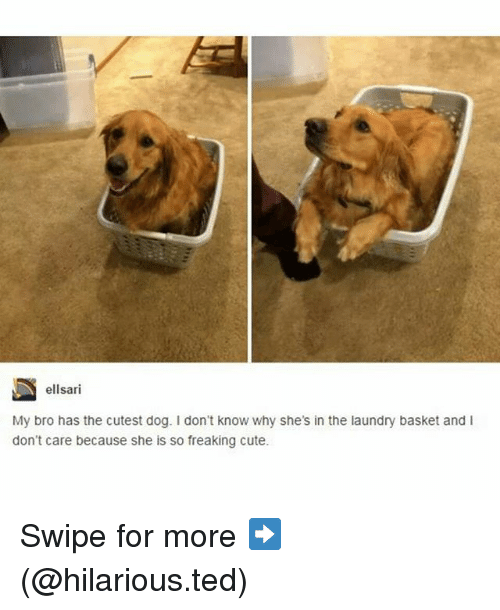 Cute, Funny, and Laundry: ellsari  My bro has the cutest dog. don't know why she's in the laundry basket and  don't care because she is so freaking cute. Swipe for more ➡ (@hilarious.ted)