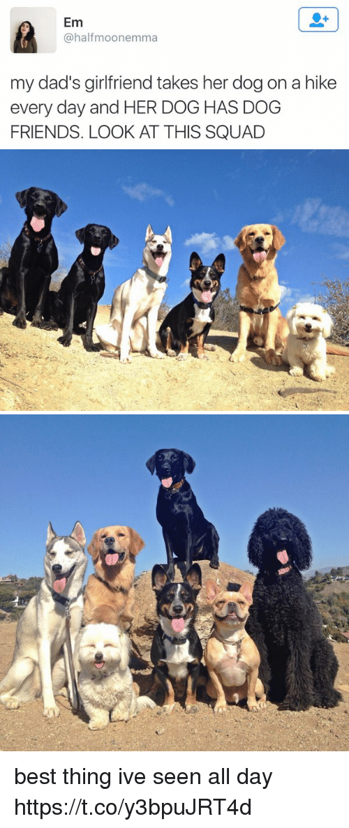 Friends, Memes, and Squad: Em  @half moonemma  my dad's girlfriend takes her dog on a hike  every day and HER DOG HAS DOG  FRIENDS. LOOK AT THIS SQUAD   膺  yes,   C best thing ive seen all day https://t.co/y3bpuJRT4d