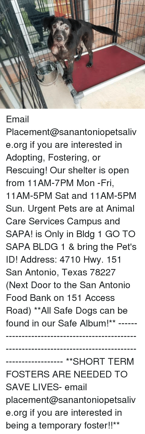 bringed: Email Placement@sanantoniopetsalive.org if you are interested in Adopting, Fostering, or Rescuing!  Our shelter is open from 11AM-7PM Mon -Fri, 11AM-5PM Sat and 11AM-5PM Sun.  Urgent Pets are at Animal Care Services Campus and SAPA! is Only in Bldg 1 GO TO SAPA BLDG 1 & bring the Pet's ID! Address: 4710 Hwy. 151 San Antonio, Texas 78227 (Next Door to the San Antonio Food Bank on 151 Access Road)  **All Safe Dogs can be found in our Safe Album!** ---------------------------------------------------------------------------------------------------------- **SHORT TERM FOSTERS ARE NEEDED TO SAVE LIVES- email placement@sanantoniopetsalive.org if you are interested in being a temporary foster!!**