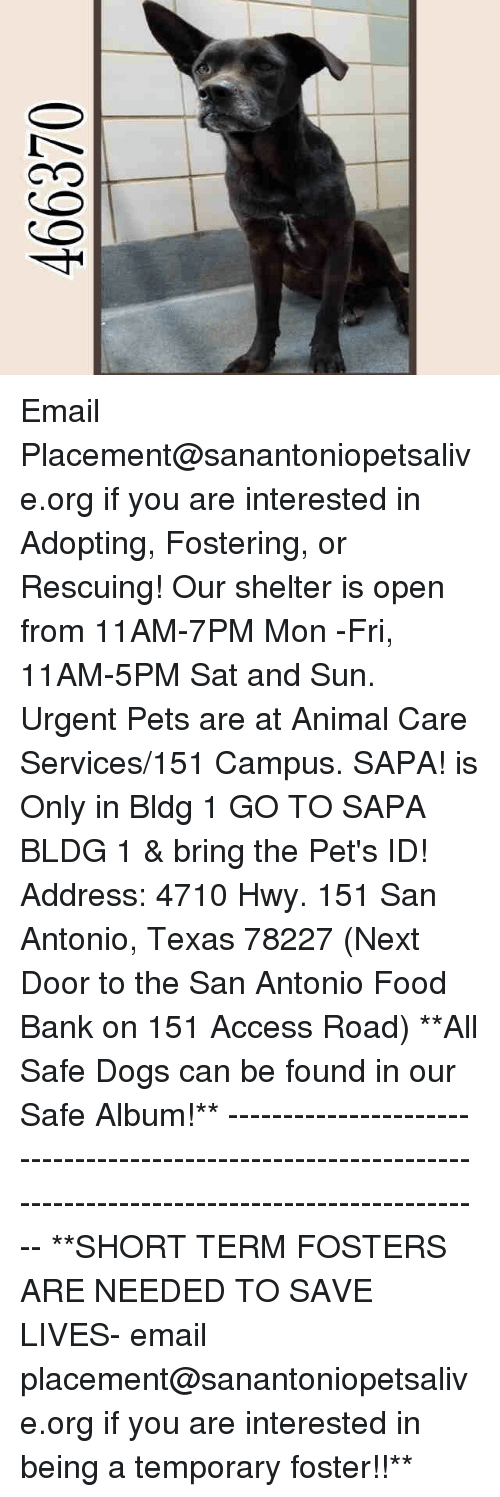 SIZZLE: Email Placement@sanantoniopetsalive.org if you are interested in Adopting, Fostering, or Rescuing!  Our shelter is open from 11AM-7PM Mon -Fri, 11AM-5PM Sat and Sun.  Urgent Pets are at Animal Care Services/151 Campus. SAPA! is Only in Bldg 1 GO TO SAPA BLDG 1 & bring the Pet's ID! Address: 4710 Hwy. 151 San Antonio, Texas 78227 (Next Door to the San Antonio Food Bank on 151 Access Road)  **All Safe Dogs can be found in our Safe Album!** ---------------------------------------------------------------------------------------------------------- **SHORT TERM FOSTERS ARE NEEDED TO SAVE LIVES- email placement@sanantoniopetsalive.org if you are interested in being a temporary foster!!**