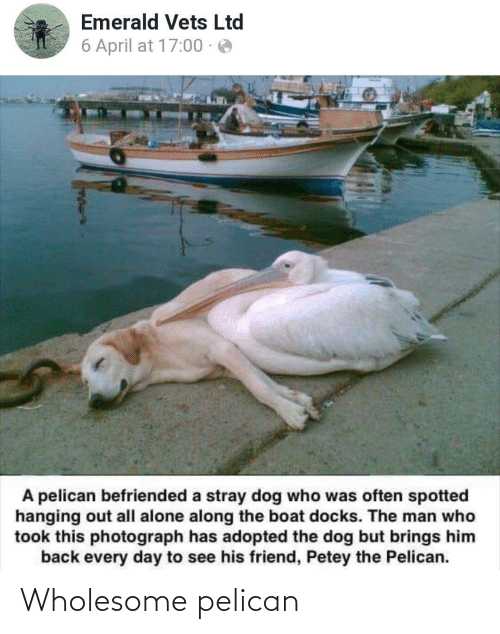 hanging: Emerald Vets Ltd  6 April at 17:00 · e  A pelican befriended a stray dog who was often spotted  hanging out all alone along the boat docks. The man who  took this photograph has adopted the dog but brings him  back every day to see his friend, Petey the Pelican. Wholesome pelican