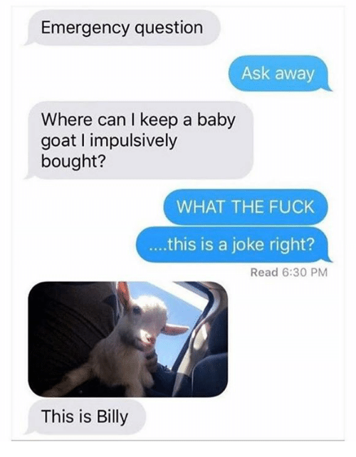 Dank, Goat, and Fuck: Emergency question  Ask away  Where can I keep a baby  goat impulsively  bought?  WHAT THE FUCK  this is a joke right?  Read 6:30 PM  This is Billy