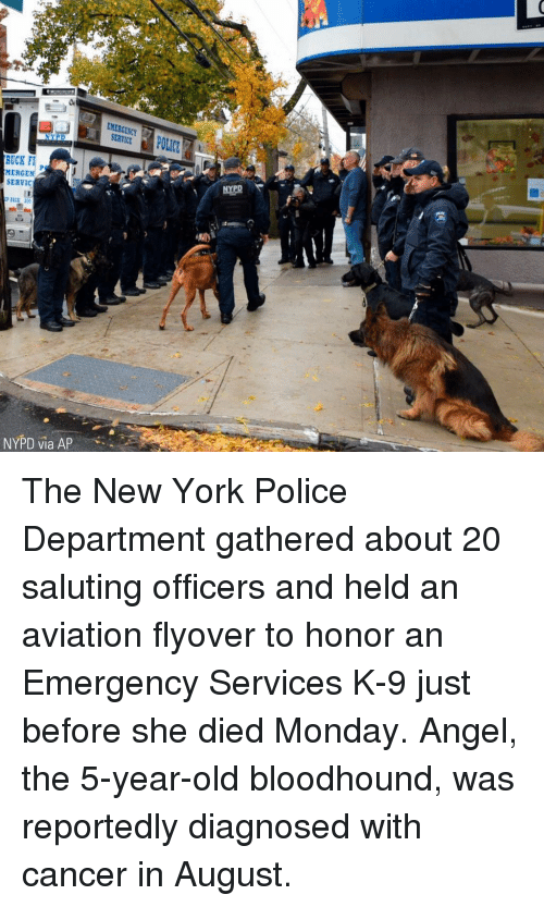 Saluting: EMERGENCY  SERVICE  RUCK F  MERGEN  SERVIC  50  NYPD via AP The New York Police Department gathered about 20 saluting officers and held an aviation flyover to honor an Emergency Services K-9 just before she died Monday. Angel, the 5-year-old bloodhound, was reportedly diagnosed with cancer in August.