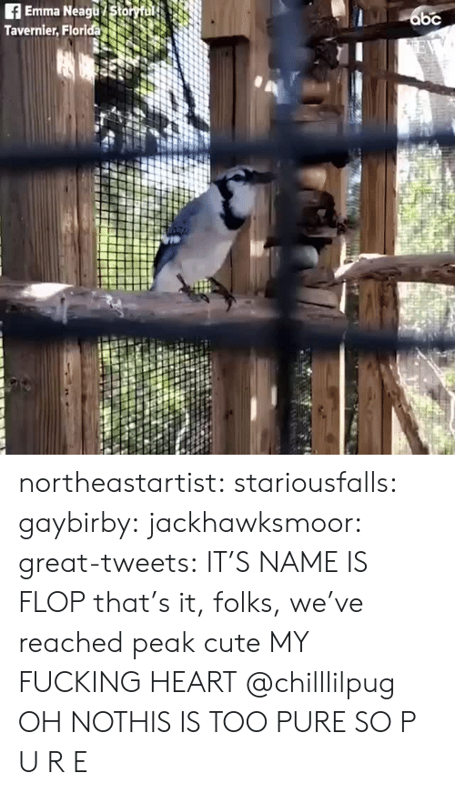 Too Pure: Emma Neagu Stor  Tavernier, Florida northeastartist:  stariousfalls: gaybirby:  jackhawksmoor:  great-tweets:   IT'S NAME IS FLOP  that's it, folks, we've reached peak cute   MY FUCKING HEART   @chilllilpug   OH NOTHIS IS TOO PURE  SO P U R E