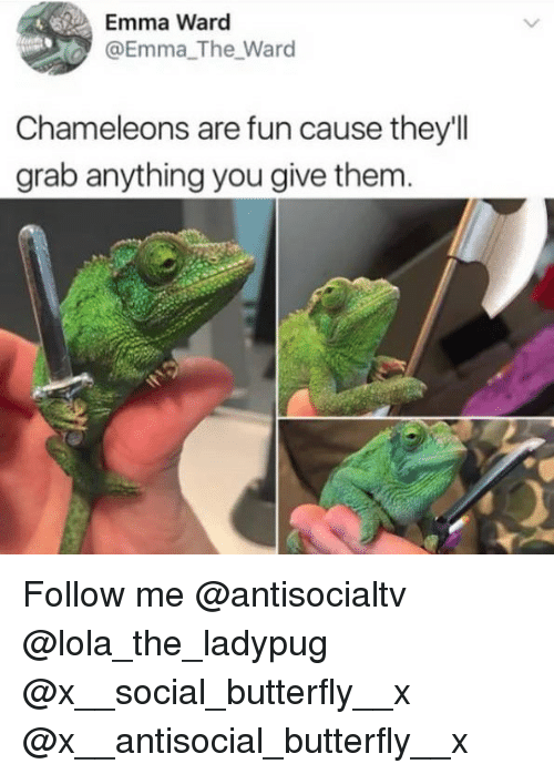 Memes, Butterfly, and Antisocial: Emma Ward  @Emma The Ward  Chameleons are fun cause they'll  grab anything you give them Follow me @antisocialtv @lola_the_ladypug @x__social_butterfly__x @x__antisocial_butterfly__x