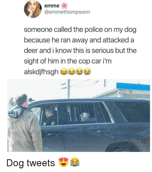 cop car: emme  @emmethompsonn  someone called the police on my dog  because he ran away and attacked a  deer and i know this is serious but the  sight of him in the cop car i'm  alskdjfhsgh Dog tweets 😍😂