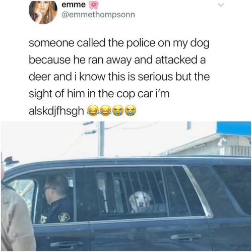Deer: emme  @emmethompsonn  someone called the police on my dog  because he ran away and attacked a  deer and i know this is serious but the  sight of him in the cop car i'm  alskdjfhsgh
