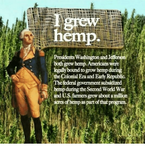 the colony: emp  Presidents Washington and J  both grew hemp. Americans  were  legally bound togrow hemp during  the Colonial Era andEarly Republic.  The federal government  hempduring the Second World War  and US farmers grew aboutamillion  Sacresofhempaspartofthatp
