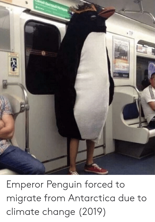 Antarctica: Emperor Penguin forced to migrate from Antarctica due to climate change (2019)