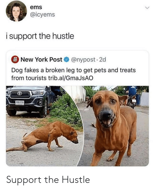 hustle: ems  @icyems  isupport the hustle  New York Post@nypost. 2d  Dog fakes a broken leg to get pets and treats  from tourists trib.al/GmaJsAO  2 4785 Support the Hustle