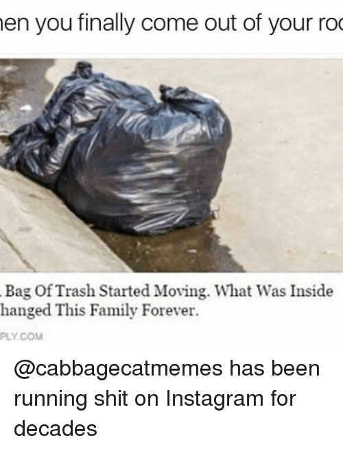 hanged: en you finally come out of your roo  Bag Of Trash Started Moving. What Was Inside  hanged This Family Forever. @cabbagecatmemes has been running shit on Instagram for decades