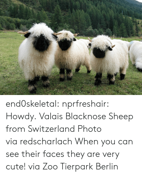 Very Cute: end0skeletal:  nprfreshair:  Howdy. Valais Blacknose Sheep from Switzerland Photo viaredscharlach  When you can see their faces they are very cute! via Zoo Tierpark Berlin