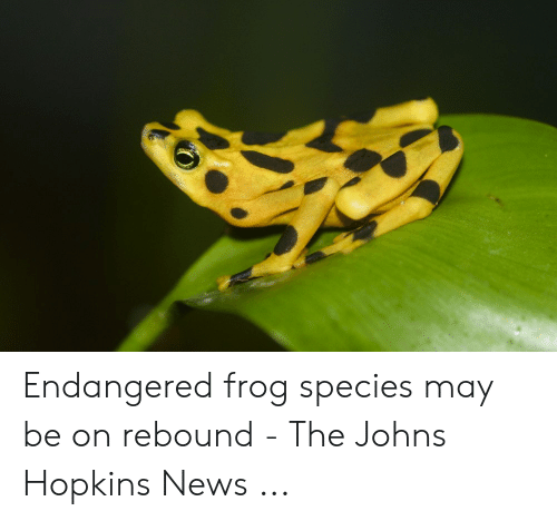 Frog Species: Endangered frog species may be on rebound - The Johns Hopkins News ...