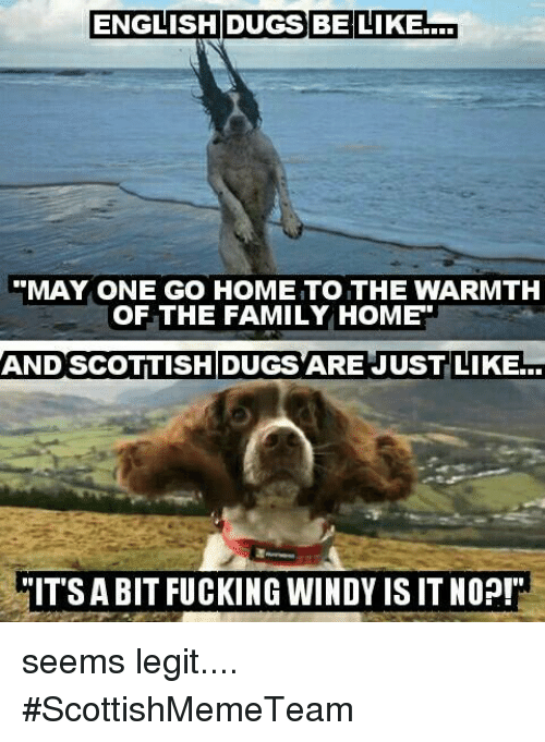 "Be Like, Memes, and English: ENGLISH DUGS BE LIKE  a  ""MAY ONE GO HOME TO THE WARMTH  OF THE FAMILY HOME  AND SCOTTISH DUGS ARE JUST LIKE...  MITSABIT FUCKING WINDY ISIT NOP! seems legit....     #ScottishMemeTeam"