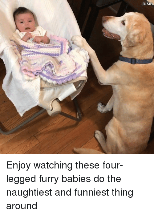 Memes, 🤖, and Furry: Enjoy watching these four-legged furry babies do the naughtiest and funniest thing around