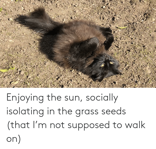 seeds: Enjoying the sun, socially isolating in the grass seeds (that I'm not supposed to walk on)