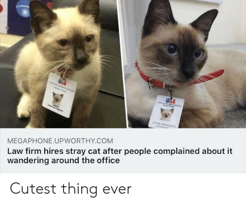 wandering: EON ADVOGATO  AL  Law firm hires stray cat after people complained about it  wandering around the office  MEGAPHONE.UPWORTHY.COM Cutest thing ever