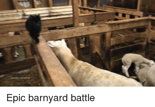 Epic, Barnyard, and Battle: Epic barnyard battle
