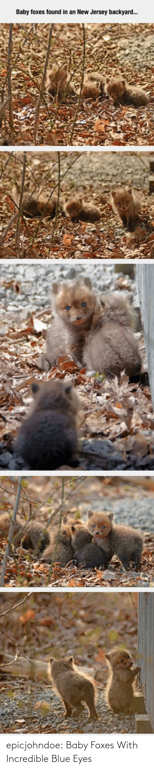Tumblr, Blog, and Blue: epicjohndoe:  Baby Foxes With Incredible Blue Eyes