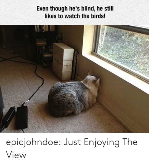 View: epicjohndoe:  Just Enjoying The View
