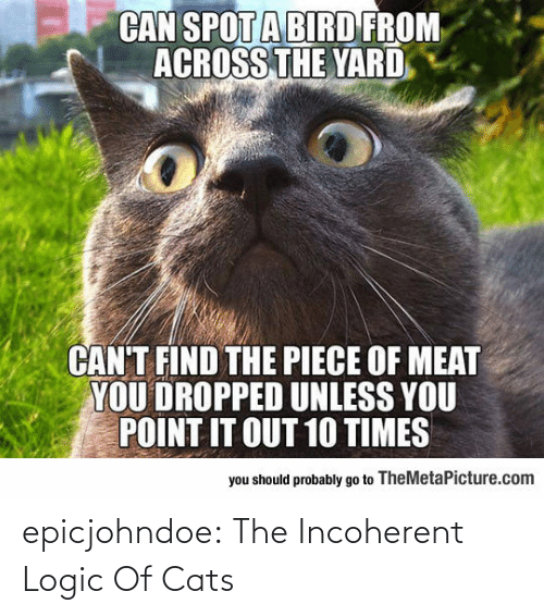 Logic: epicjohndoe:  The Incoherent Logic Of Cats