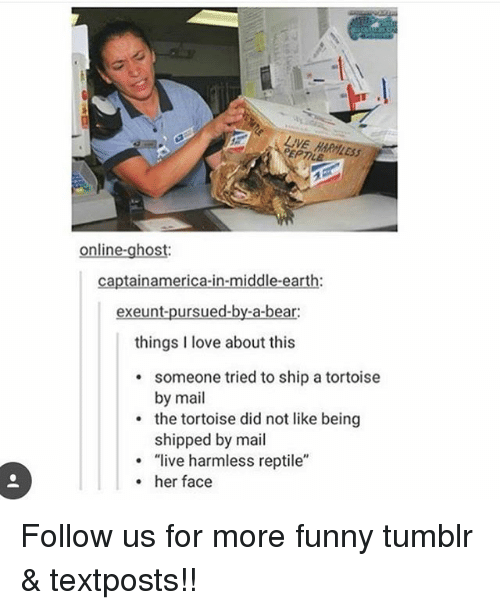 """Funny, Love, and Memes: EPT  online-ghost:  captainamerica-in-middle-earth:  exeunt-pursued-by-a-bear:  things I love about this  someone tried to ship a tortoise  by mail  the tortoise did not like being  shipped by mail  """"live harmless reptile""""  .  . her face Follow us for more funny tumblr & textposts!!"""
