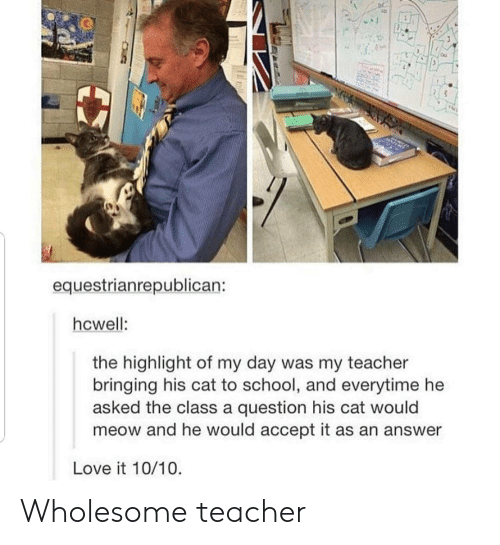 highlight: equestrianrepublican:  hcwell:  the highlight of my day was my teacher  bringing his cat to school, and everytime he  asked the class a question his cat would  meow and he would accept it as an answer  Love it 10/10 Wholesome teacher