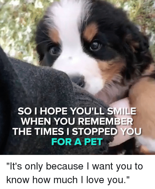"Love, Memes, and I Love You: er  SO I HOPE YOU'LL SMILE  WHEN YOU REMEMBER  THE TIMES I STOPPED YOU  FOR A PET ""It's only because I want you to know how much I love you."""