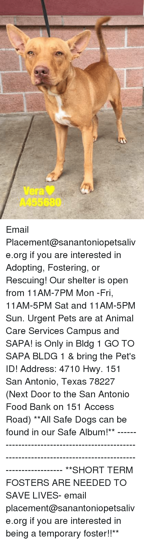Dogs, Food, and Memes: era  A455680 Email Placement@sanantoniopetsalive.org if you are interested in Adopting, Fostering, or Rescuing!  Our shelter is open from 11AM-7PM Mon -Fri, 11AM-5PM Sat and 11AM-5PM Sun.  Urgent Pets are at Animal Care Services Campus and SAPA! is Only in Bldg 1 GO TO SAPA BLDG 1 & bring the Pet's ID! Address: 4710 Hwy. 151 San Antonio, Texas 78227 (Next Door to the San Antonio Food Bank on 151 Access Road)  **All Safe Dogs can be found in our Safe Album!** ---------------------------------------------------------------------------------------------------------- **SHORT TERM FOSTERS ARE NEEDED TO SAVE LIVES- email placement@sanantoniopetsalive.org if you are interested in being a temporary foster!!**