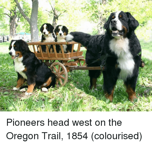 Dank, Oregon Trail, and Oregon: 'ES Pioneers head west on the Oregon Trail, 1854 (colourised)