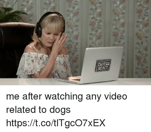 Dogs, Video, and Girl Memes: ESDERS  REACT me after watching any video related to dogs https://t.co/tlTgcO7xEX